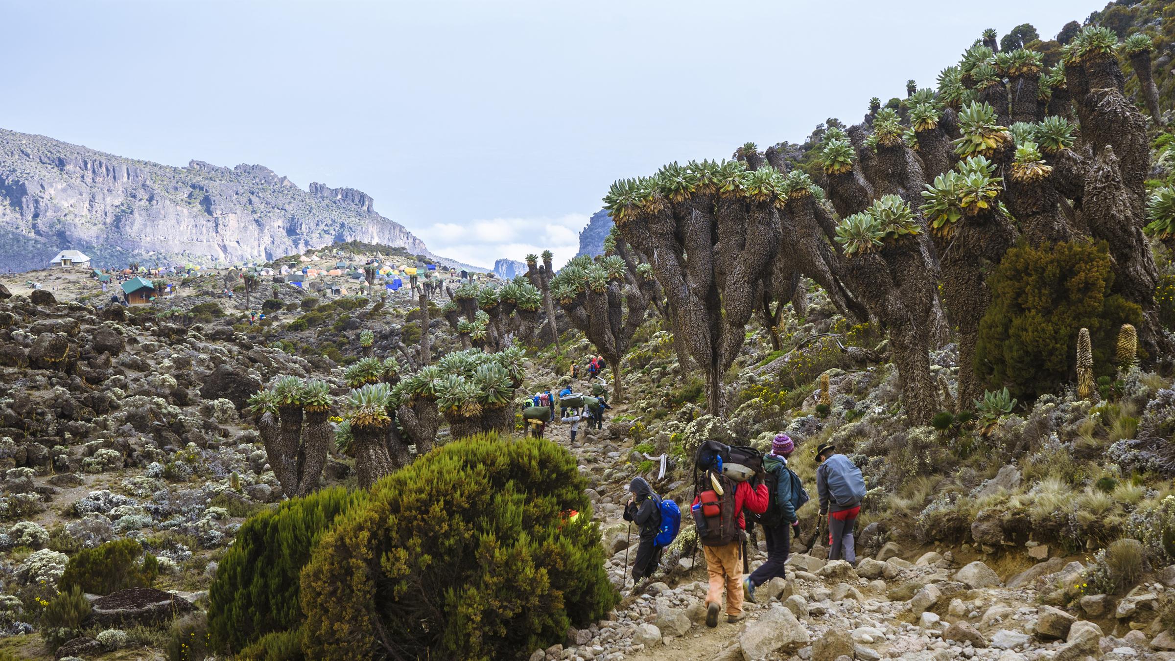 Kilimanjaro: Hết ngày dài lại đêm thâu, chúng ta đi leo núi Phi châu - Ảnh 11.