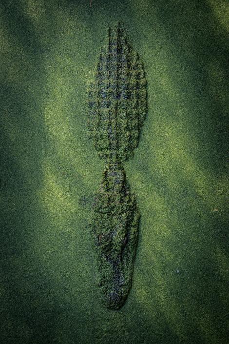 Choáng ngợp 17 ảnh sinh vật hoang dã nhìn từ trên không - Ảnh 9.