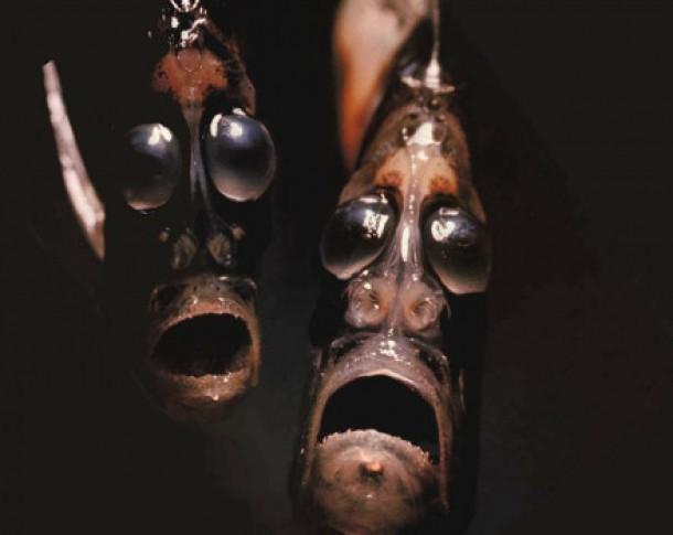 Những 'quái thú' dưới lòng đại dương - Ảnh 14.