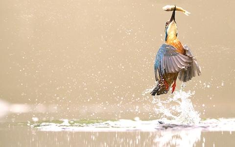 Ảnh chim đớp cá lọt vào top ảnh du lịch ấn tượng nhất mọi thời - Ảnh 17.