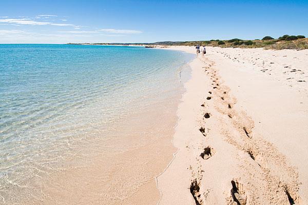Đến Australia dạo bước trên bãi biển vỏ sò - Ảnh 3.
