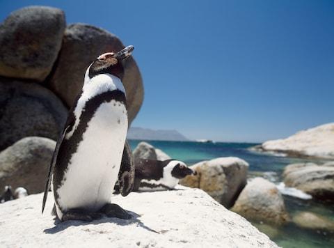 Đến đâu để vừa được tắm biển vừa ôm thú cưng? (Phần 1) - ảnh 3