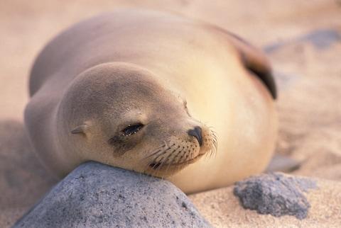 Đến đâu để vừa được tắm biển vừa ôm thú cưng? (Phần 1) - ảnh 8