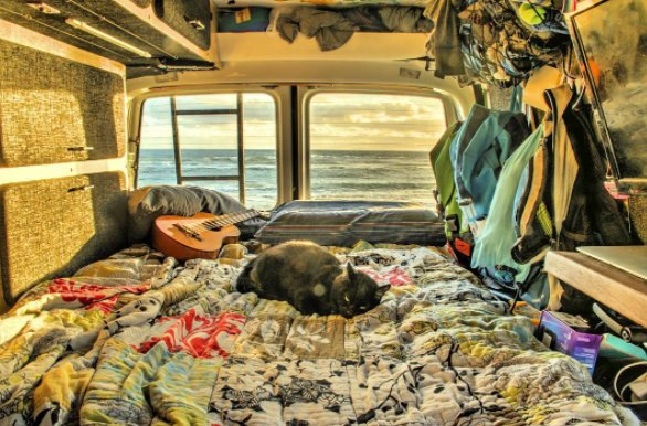 Chàng trai nghỉ việc đi du lịch cùng mèo cưng - Ảnh 4.