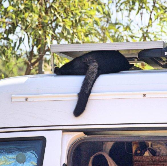 Chàng trai nghỉ việc đi du lịch cùng mèo cưng - Ảnh 5.