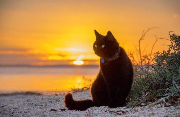 Chàng trai nghỉ việc đi du lịch cùng mèo cưng - Ảnh 7.