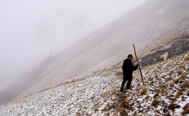 Hành trình vượt đèo tử thần của những đàn ông gan dạ và đàn cừu khổng lồ - Ảnh 1.