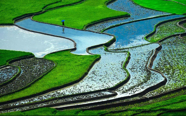 1. Ruộng bậc thang mùa nước đổ (Việt Nam) là một trong những cảnh quan tuyệt vời nhất thế giới, khung cảnh được bao trùm bởi màu xanh của lúa sau khi cấy. Việt Nam được biết đến là một trong những nước xuất khẩu gạo lớn nhất thế giới.