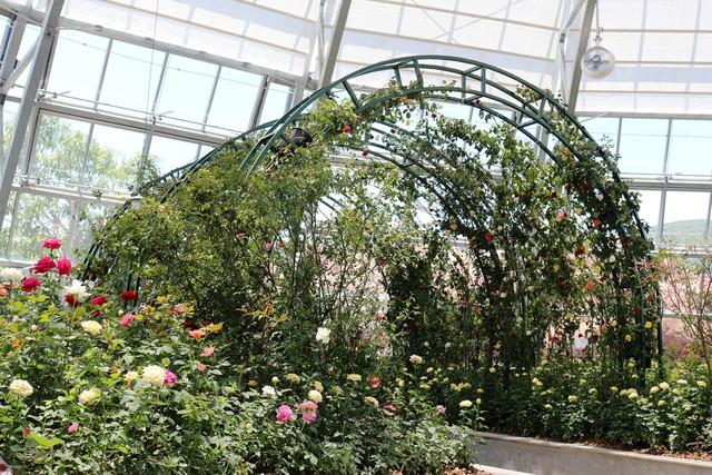 Vinpearl Land Nha Trang mở cửa Đồi vạn hoa với hàng ngàn kỳ hoa, dị thảo - Ảnh 2.