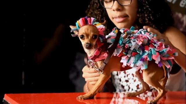 Đến El Salvador xem cún cưng diễn thời trang - Ảnh 10.