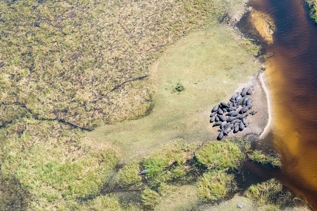 Choáng ngợp 17 ảnh sinh vật hoang dã nhìn từ trên không - Ảnh 11.