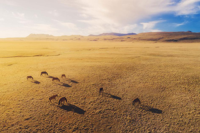 Choáng ngợp 17 ảnh sinh vật hoang dã nhìn từ trên không - Ảnh 16.