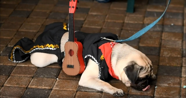 Đến El Salvador xem cún cưng diễn thời trang - Ảnh 8.