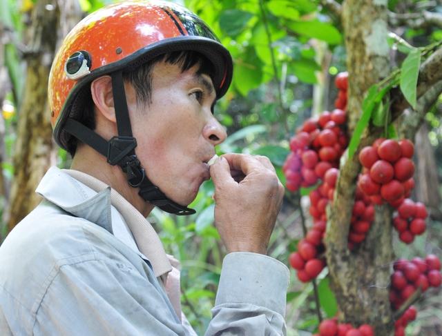 Đi Phú Yên ngắm vườn cây đỏ, ăn trái đỏ chua lè lưỡi - Ảnh 3.
