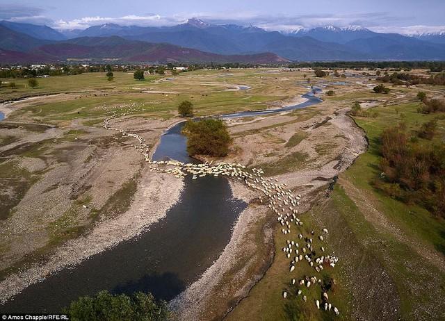 Hành trình vượt đèo tử thần của những đàn ông gan dạ và đàn cừu khổng lồ - Ảnh 3.