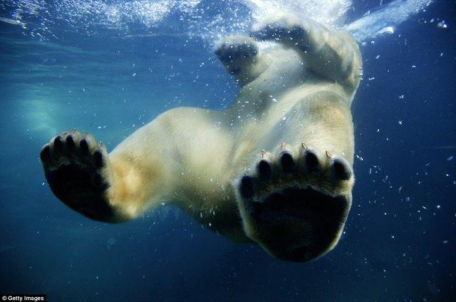 Đi du lịch phải cẩn thận trước những loài vật đáng sợ này - Ảnh 1.