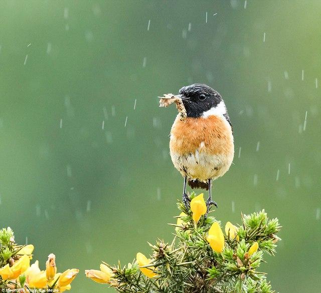 Thiên nhiên nước Anh đẹp nao lòng qua ảnh chụp - Ảnh 2.