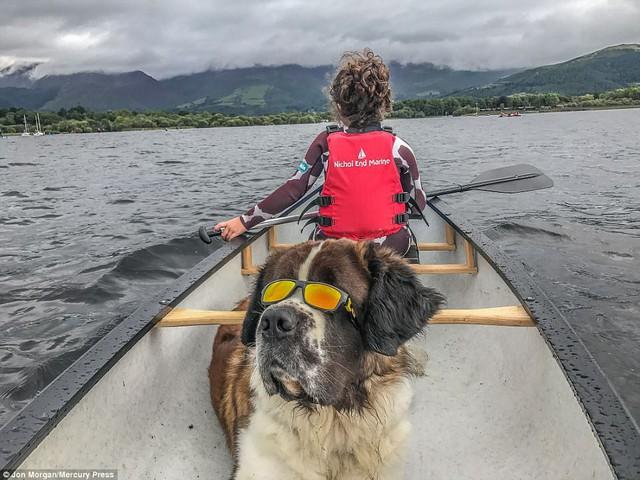 Chú chó cùng chủ lướt ván, trượt tuyết, cắm trại hàng tuần
