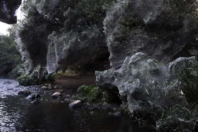 Động bàn tơ tựa phim kinh dị bên dòng suối ở Israel - Ảnh 2.