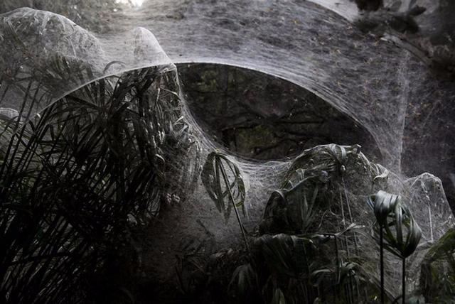 Động bàn tơ tựa phim kinh dị bên dòng suối ở Israel - Ảnh 3.