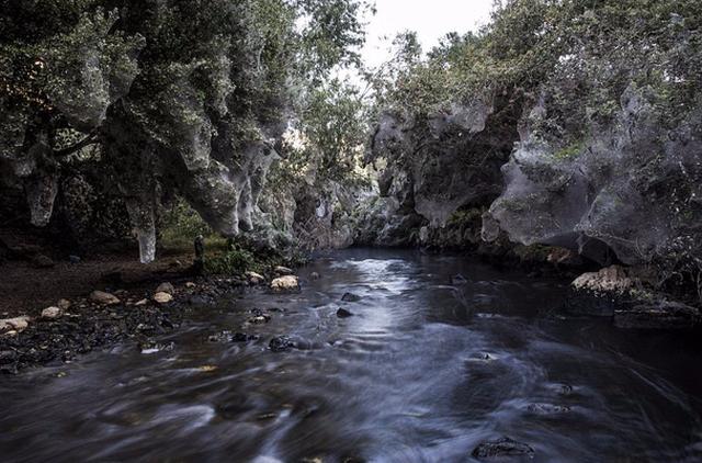 Động bàn tơ tựa phim kinh dị bên dòng suối ở Israel - Ảnh 5.