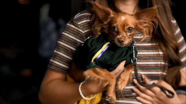 Đến El Salvador xem cún cưng diễn thời trang - Ảnh 6.