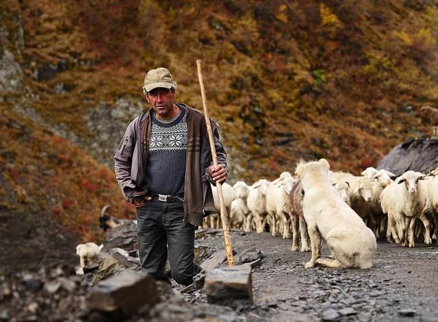 Hành trình vượt đèo tử thần của những đàn ông gan dạ và đàn cừu khổng lồ - Ảnh 8.