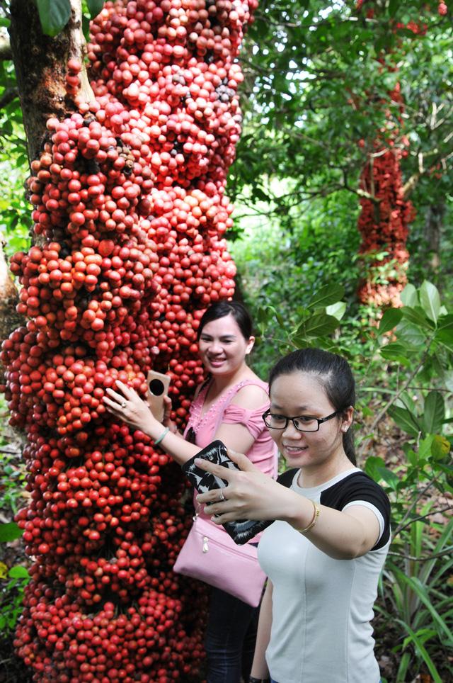 Đi Phú Yên ngắm vườn cây đỏ, ăn trái đỏ chua lè lưỡi - Ảnh 7.