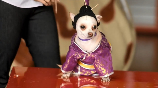 Đến El Salvador xem cún cưng diễn thời trang - Ảnh 3.