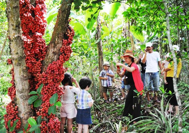 Đi Phú Yên ngắm vườn cây đỏ, ăn trái đỏ chua lè lưỡi - Ảnh 8.