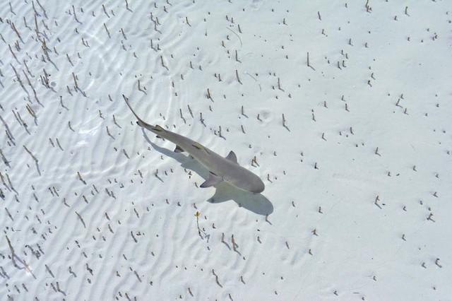 Choáng ngợp 17 ảnh sinh vật hoang dã nhìn từ trên không - Ảnh 8.