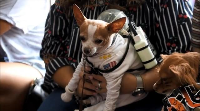 Đến El Salvador xem cún cưng diễn thời trang - Ảnh 1.