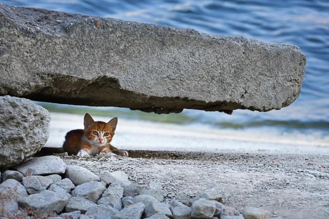 Đi đâu để vừa tắm biển vừa ôm thú cưng? (Phần 2) - Ảnh 4.