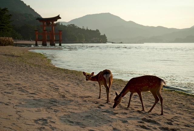 Đi đâu để vừa tắm biển vừa ôm thú cưng? (Phần 2) - Ảnh 8.