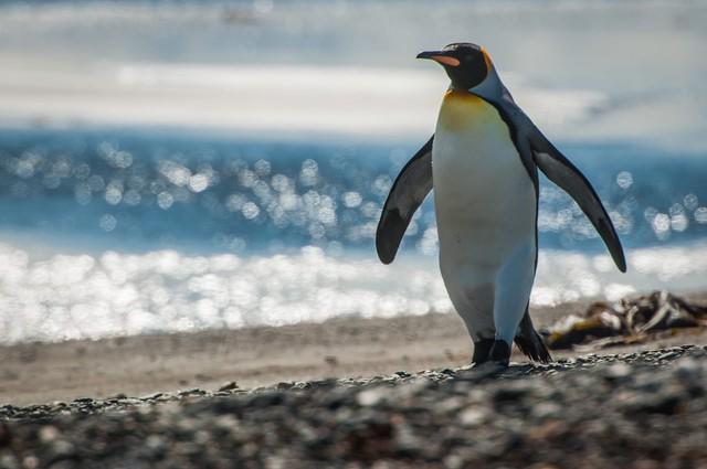 Đi đâu để vừa tắm biển vừa ôm thú cưng? (Phần 2) - Ảnh 7.