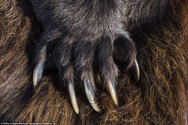 Đi du lịch phải cẩn thận trước những loài vật đáng sợ này - Ảnh 9.