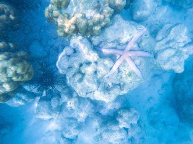 Tận hưởng cảnh đẹp mê ly ở Coral - đảo san hô đẹp nhất Thái Lan