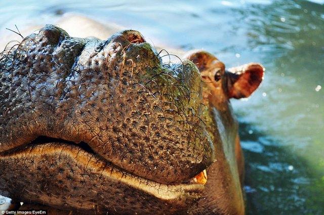 Đi du lịch phải cẩn thận trước những loài vật đáng sợ này - Ảnh 12.
