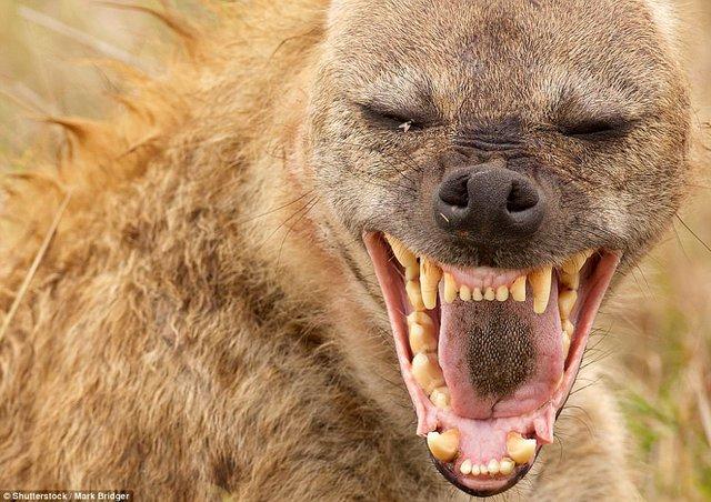 Đi du lịch phải cẩn thận trước những loài vật đáng sợ này - Ảnh 14.