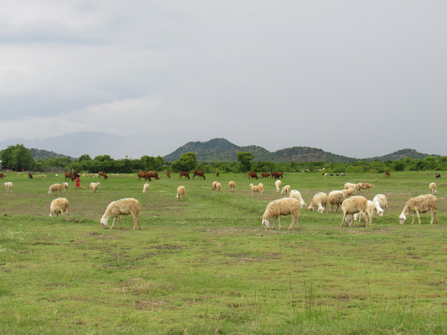 Tung tăng Phan Rang, Núi Chúa, Bình Lập với giá 1,2 triệu đồng - Ảnh 9.