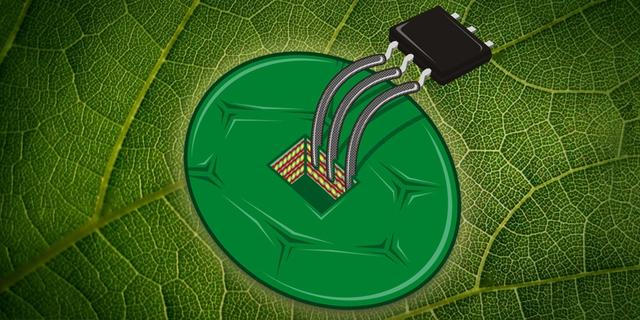 Phát triển rau sinh học nano để nhận diện bom - Ảnh 3.