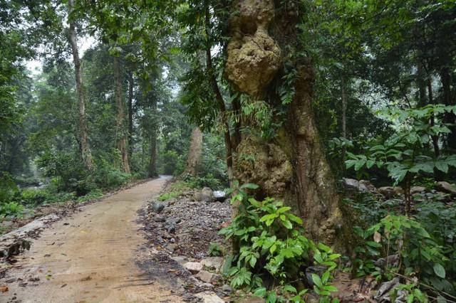 Vào Vườn quốc gia Xuân Sơn hoang sơ và hùng vĩ
