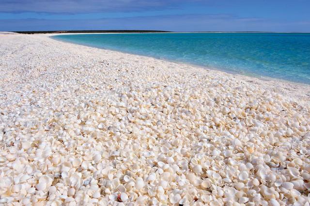 Đến Australia dạo bước trên bãi biển vỏ sò - Ảnh 1.