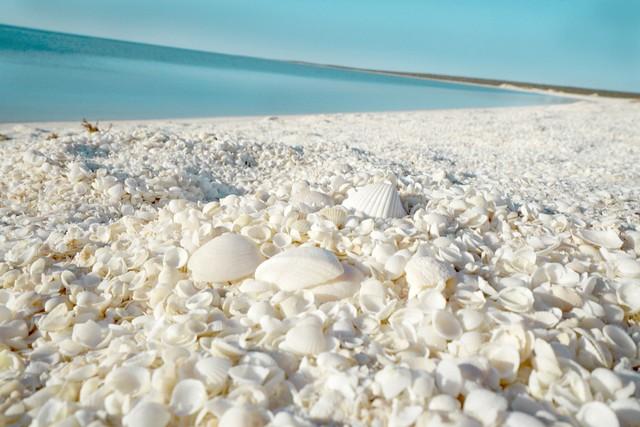 Đến Australia dạo bước trên bãi biển vỏ sò - Ảnh 2.