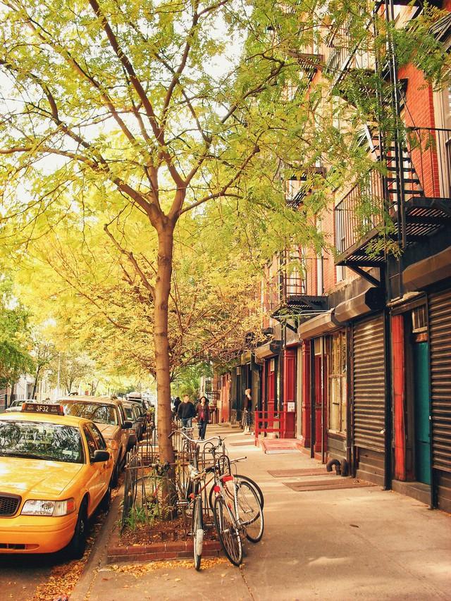 Em có nghe mùa thu ở New York - Ảnh 1.