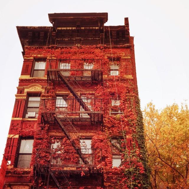 Em có nghe mùa thu ở New York - Ảnh 2.