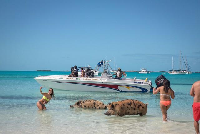 Đến đâu để vừa được tắm biển vừa ôm thú cưng? (Phần 1) - ảnh 2
