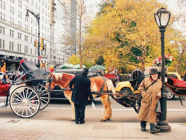 Em có nghe mùa thu ở New York - Ảnh 3.