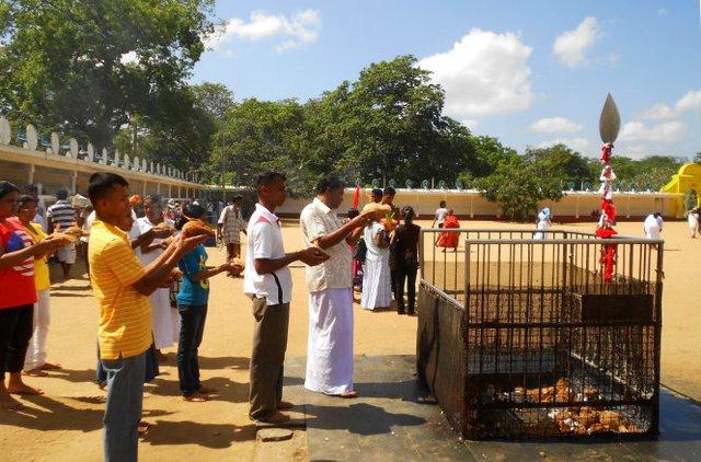 Khám phá miền Nam đảo quốc hình giọt lệ Sri Lanka - Ảnh 4.
