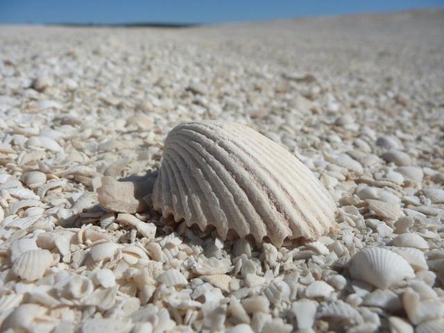 Đến Australia dạo bước trên bãi biển vỏ sò - Ảnh 4.